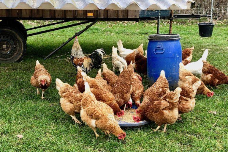 Eier von glücklichen Hühner Kreis Pinneberg Hof Wiedwisch Kummerfeld Ostern Bio-Ei Weideeier Weidehühner