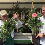 Rosen aus Pinneberg von der Baumschule Koopmann
