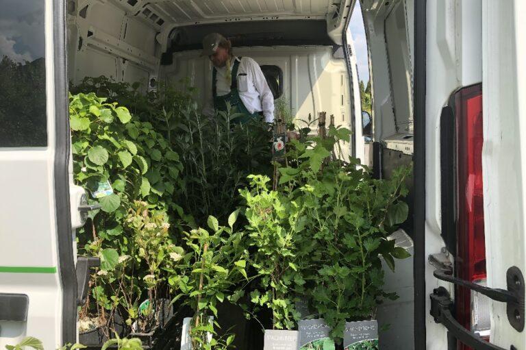 Baumschule Koopmann Rainer Koopmann Rosen Pflanzen Muttertag Corona die Norderstedterin