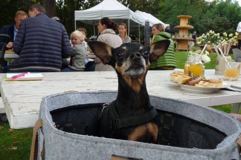 Goldschätzchen Prisdorf Schöner Sonntag im Garten Barbecue Patrick Diehr die Nordersteddterin